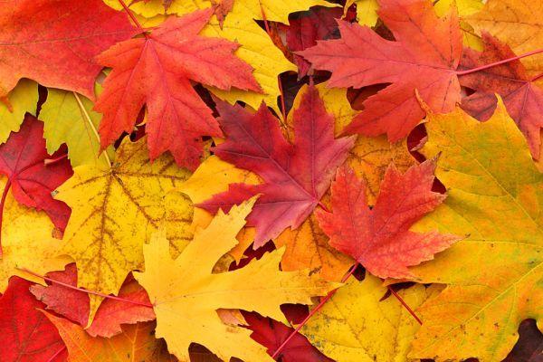 Есен във втори клас... - голяма снимка